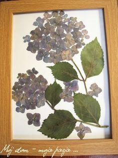 diy, flowers, picture, hydrangea