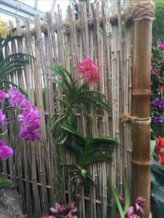 Liked the bamboo idea as a screen to hang orchids