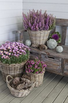 Impressive Front Porch Landscaping Ideas to Increase Your Home Beautiful Be. Impressive Front Porch Landscaping Ideas to Increase Your Home Impressive Front Porch Landscaping Ideas to Increase Your Home Beautiful, Amazing Gardens, Beautiful Gardens, Beautiful Flowers, Beautiful Beautiful, Container Plants, Container Gardening, Indoor Gardening Supplies, Gardening Tips, Organic Gardening
