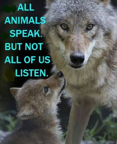 by stopping this will regenerate the wolf population with a protection order put into action to stop killing baby wolves . Join the campaign and make a difference.