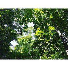 【cutielon】さんのInstagramをピンしています。 《2016.8.18 * 緑の木々が、葉が何層にも重なり合って … 🌿🍃 * 木洩れ日の中を歩いてみた👣 * 静かで、鳥のさえずりと風の音しか聞こえない🌿 * 大きく深呼吸してみた🌲 * 暑さを忘れた瞬間🤗✨ * #森 #森の中を歩く #静けさ #木洩れ日 #生き返った瞬間 #一時の涼 #札幌芸術の森 * #forest #layersofgreen #layersofleaves #walkintheforest #serenity #sunlight #wind #sunlightfilteringthroughtrees #refreshing #sapporoartpark》