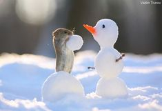 Woodland creatures build snowmen, toss snowballs in photographer& winter playground Russian photographer Vadim Trunov captures squirrels and other rodents playing in the snow. Baby Animals Super Cute, Cute Little Animals, Cute Funny Animals, Baby Animals Pictures, Cute Animal Pictures, Animals And Pets, Animal Pics, Baby Pictures, Funny Hamsters