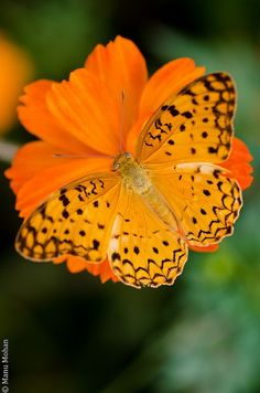 Orange flower and butterfly