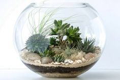 One way is to display the terrarium. The terrarium is a small garden in a glass container. Mini Terrarium, Terrarium Plants, Succulent Terrarium, Planting Succulents, Planting Flowers, Succulent Bowls, Cactus Y Suculentas, Cactus Flower, Small Gardens