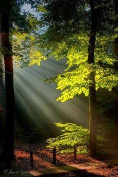 .Light & nature