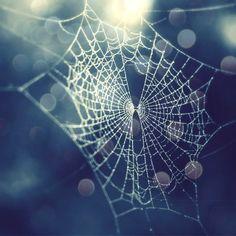 Crystalline cob web halloween wall art spider web Photograph - Lupen Grainne via Etsy #fpoe