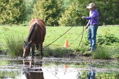 Trainer Jonathan Field shares tips for successful water crossing.