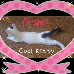 Very hot! LOL Cute Little Things, Call Her, Kitty, Lol, Cool Stuff, Little Kitty, Kitty Cats, Kitten, Cats