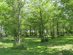 Agroforestry - Google Search