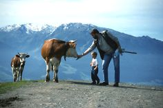 Pet a Cow in Switzerland