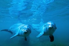 Bottlenose Dolphin Adopts a Baby Orphan of a Different Species