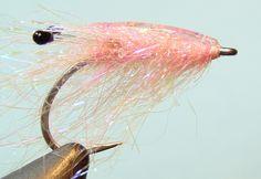 south sound shrimp