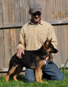 European German Shepherds for your family! World-class, champion bloodlines. Veteran Owned. Puppies available now.