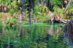 Waters Of Blue Springs by John M Bailey   See more at http://johnbaileyphotoart.com/index.html?tab=galleries #nature #photography #florida