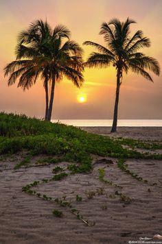 Sunrise over Palm Trees & Sand Dunes on Singer Island Beach, Florida ✯ ωнιмѕу ѕαη∂у