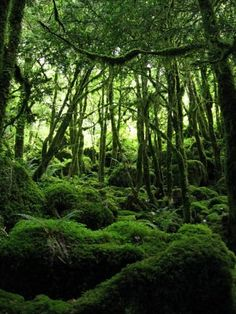 The Russian forests played a big role in 'Angels'. I love the dark, yet fairy tale quality of forests.