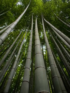 Magical Serene Bamboo Forest - Kyoto, Japan. Buy this print: http://www.bencrosbiephotography.pixieset.com/photography