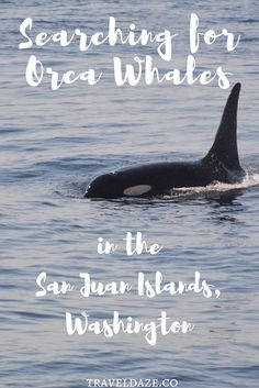 One of the best places to spot orcas is up in the waters of Washington. Go whale watching in the San Juan Islands to see these beautiful creatures up close. Usa Travel Guide, Travel Usa, Travel Tips, Travel Guides, Pacific Coast, Pacific Northwest, Seattle Travel, Orcas Island, Wale