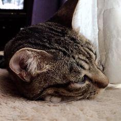 おはようございます  今日もよろしくです #cat#cats#猫#ネコ#ねこ#ねこ部#ねこら部#myfamily#pet#pets#pretty#lovely#neco#ilovecat#catlove#にゃんこ#猫バカ#家族#仲良し#親バカ#甘えん坊#instacat (ヾ(ω)ノオハヨウ(o__)o)ヘコッ by @akiko.tanaka.1481 automatic litter box  cat cats kitty cute catlover catsofinstagram catcam instacat catstagram catsagram lovecats cat product reviews