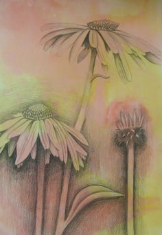Ebony Pencil flowers on watercolor backgrounds by jacqueline