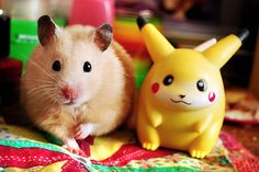 Me and friend oh my goodness so freaking cute and adorable :) hammy !!!!!!