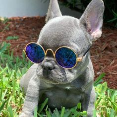 Model😂❤️ Cute French Bulldog, French Bulldog Puppies, Cute Dogs And Puppies, French Bulldogs, Frenchie Puppies, Baby Animals Super Cute, Cute Little Animals, Funny Animal Videos, Animal Pics