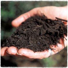 Hoy les mostraremos paso a paso como hacer un huerto que te provea de vegetales durante casi todo el año. Sembrar nuestros propios alimentos además de ser excelente para nuestra salud, nos permite …