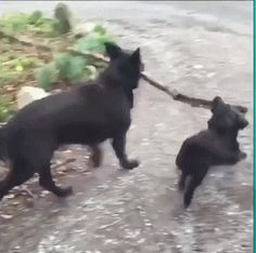 "catgifcentral: ""Friends: Branch Manager, Assistant Branch Manager"""