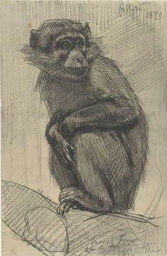 Monkey On A Branch, August Allebe, 1879 Painting by Celestial Images Animal Sketches, Animal Drawings, Drawing Sketches, Art Drawings, Monkey Drawing, Monkey Art, Drawing Reference Poses, Art Reference, Monkey Illustration