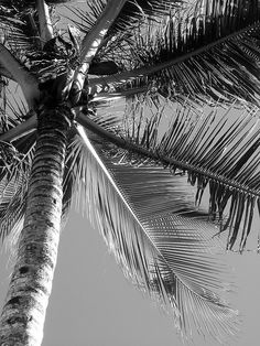 Palm tree in black and white, In an all white room. Not sure color of sofa though?