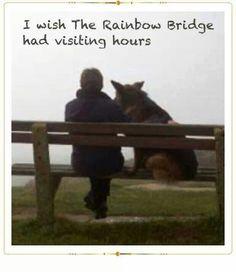 I wish The Rainbow Bridge had visiting hours