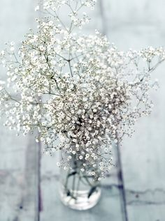 Gypsophila Color Blanco
