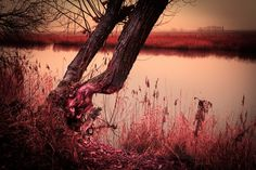 Pink history by Natalia Flora on 500px