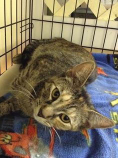 Galexy - I am a 1yr old, sweet & loving girl, with many years left of love to give :)   ADOPT ME! http://www.animalkind.info/content/Adoption_Application/Adoption_Application