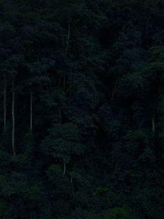 "Shan Feiming: ""Jungle No.3"" (2010-2013) Pigment print. 180 x 135cm (1 of 5 panels) - Edition of 3"