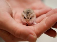 16 Tiny Baby Animals That Will Warm Your Heart