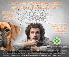 Kennel-cough-vaccine - read, learn, educate, pass it on.  Shari Sternberger~Animal Wellness Advocate