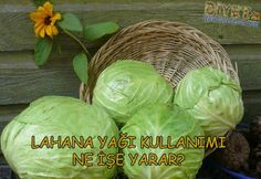 lahana yağı ne işe yarar Cabbage, Vegetables, Food, Essen, Cabbages, Vegetable Recipes, Meals, Yemek, Brussels Sprouts