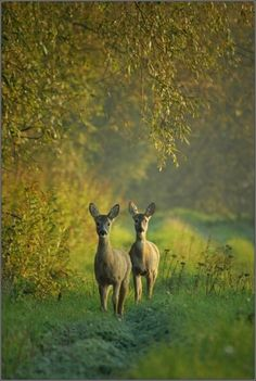 This shot reminds me of a little lane that was on our farm in Iowa -- deer and all.  Like a snapshot from my memory.  Cool.