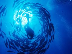 Amazing Photo of Deep Sea Diving at Ras Mohammed Park