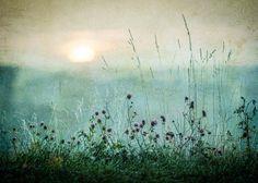 Meadow in Dawn Plakat i gruppen Plakater / Naturmotiv hos Desenio AB (2327)