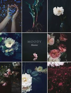 Moody Blooms: It is no secret that we are huge fans of Pinterest, we always love to see new trends in photography emerging through our favourite pinners. We've been aware of a new form of botanical photography emerging for some time, we have aptly named it Moody blooms, flora and fauna is given a deep and hazy filter making them appear all the more beautiful as they pop forward from there moody backdrops.