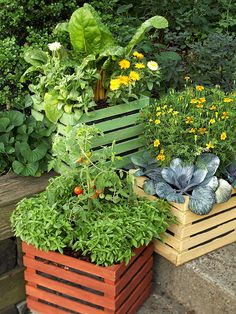 Grow edible flowers like calendula and signet marigolds to brighten containers of swiss chard, cabbage, basil and tomatoes. Like the planters