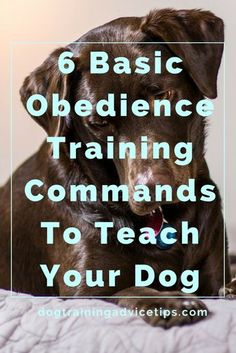 6 Basic Obedience Training Commands To Teach Your Dog | Dog Training Tips | Dog Obedience Training | Dog Training Commands |