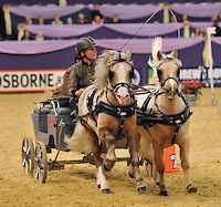 ... Horse of the year show on the 11th October2013 at the LG Arena (NEC