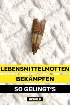 Pin Von Theresia Wekker Auf Motten In 2020 Lebensmittelmotten Motte Lebensmittel