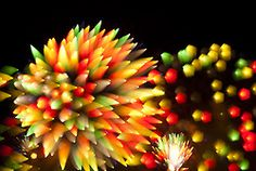 What would make fireworks better? Long exposure shots!   [Long Exposure FireworksCandy ]