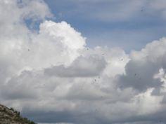 Volada de voltors