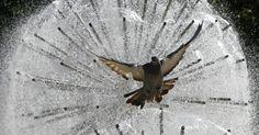 Um pombo voa em frente a uma fonte no centro de Donetsk, na Ucrânia.