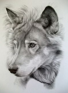 wolf amanda_kay_ropp it blows my mind that someone can draw this beautifully...incredible!